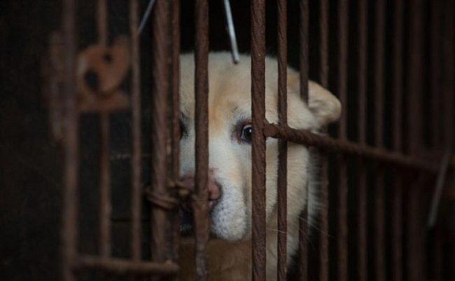 5 Negara Asia Masih Makan Anjing Kucing